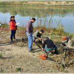 Recoltare carote busteni subfosili pt datari cu 14C (CRoibu)